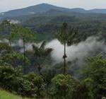 Awa, Regenwald Lebensraum des Awa-Volkes im Südwesten Kolumbiens | Bild (Ausschnitt): © Bernhard Henselmann - earthlink e.V.